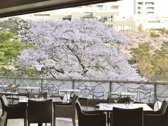 白金台のスラッシュカフェはお花見カフェ
