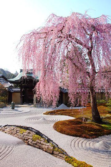 高台寺は京都の桜の定番お花見スポットの名所
