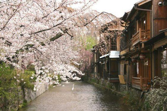 祇園白川は京都の桜の定番お花見スポットの名所