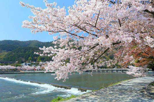 嵐山は京都の桜の定番お花見スポットの名所