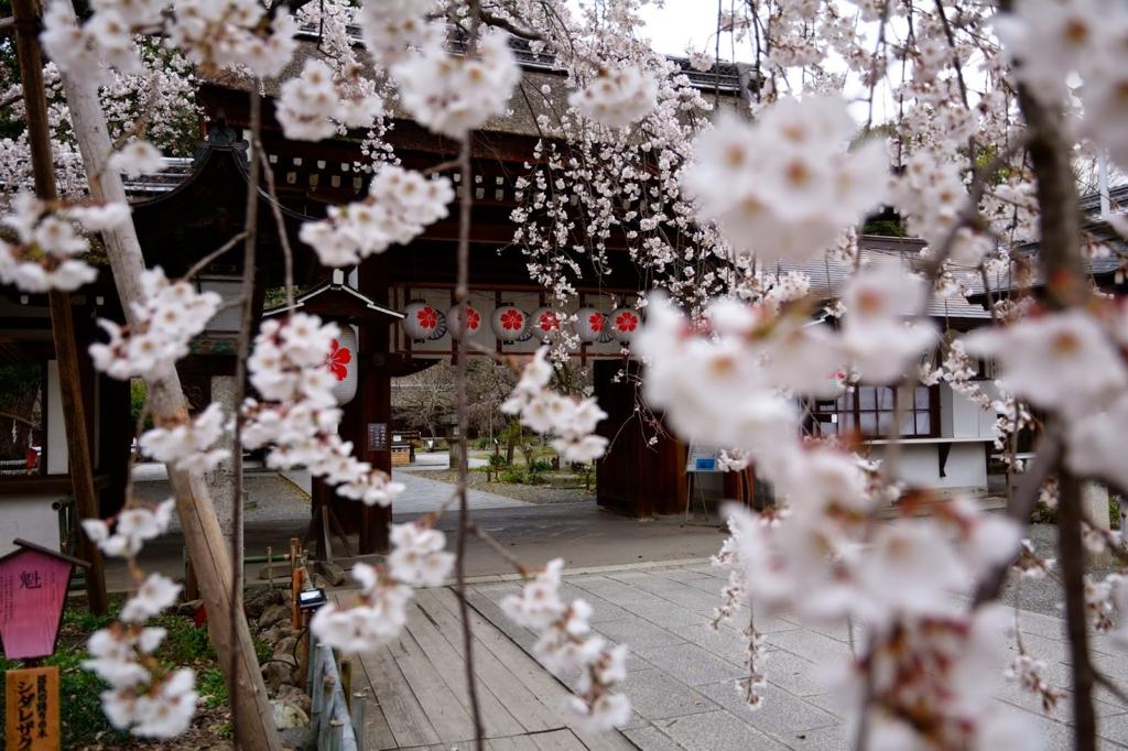 平野神社は京都の桜の名所、穴場のお花見スポット