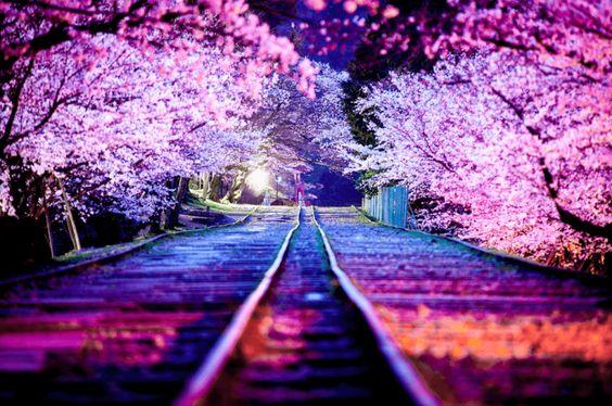 蹴上インクラインは京都の桜の名所、穴場のお花見スポット