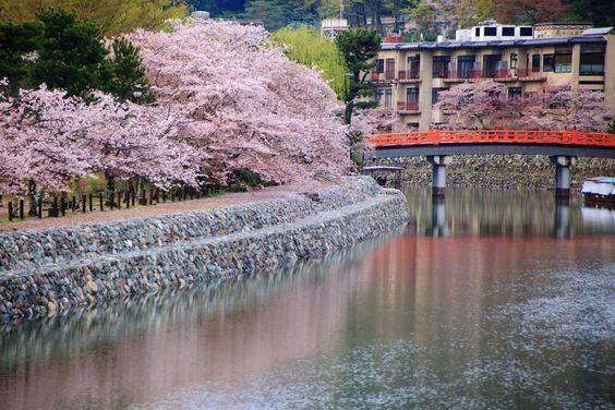 宇治橋上流は京都の桜の名所、穴場のお花見スポット