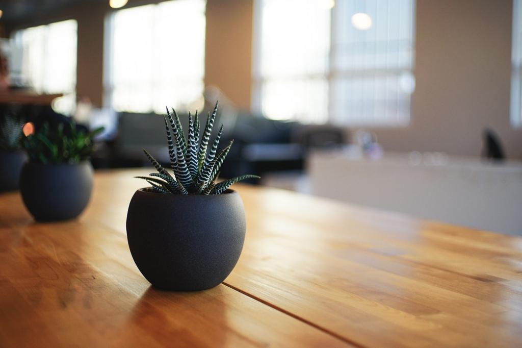 観葉植物でカフェ風のお部屋に