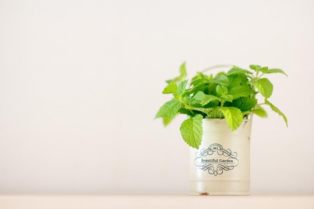 観葉植物を置くと安眠できる