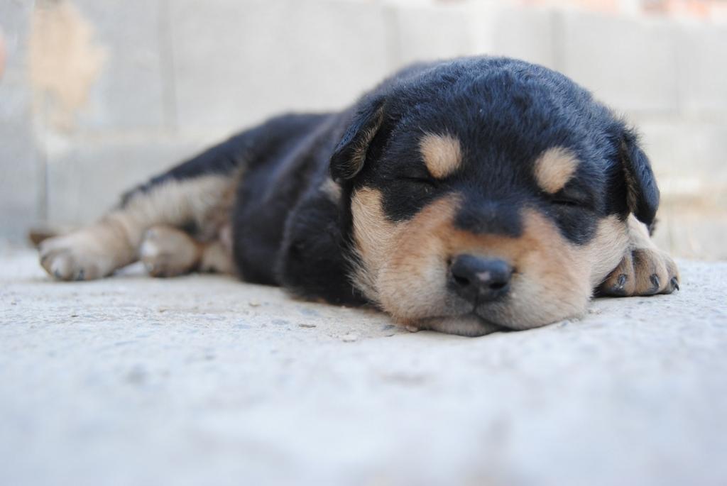 ペットと一緒に寝ると睡眠不足になる