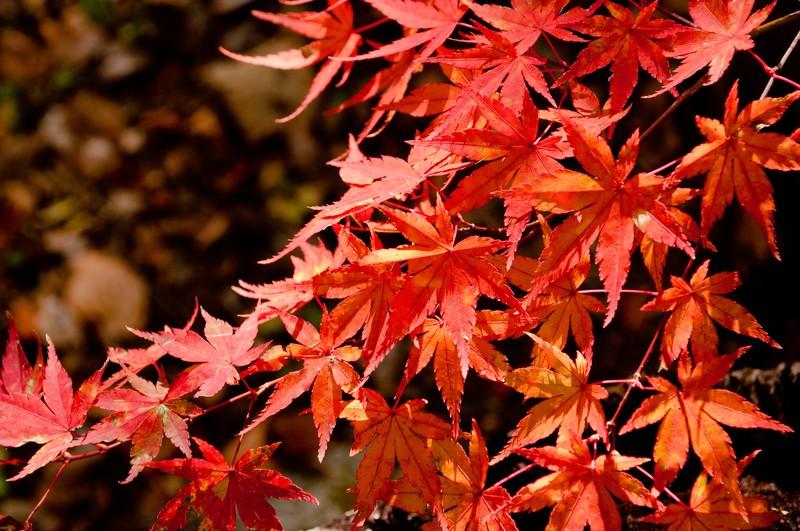 箱根で一番の紅葉の名所は箱根美術館