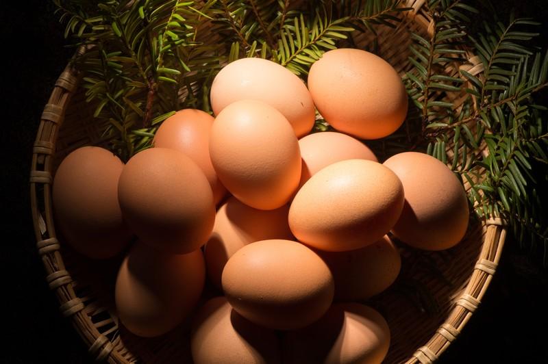 白い卵と茶色い卵の違いとは