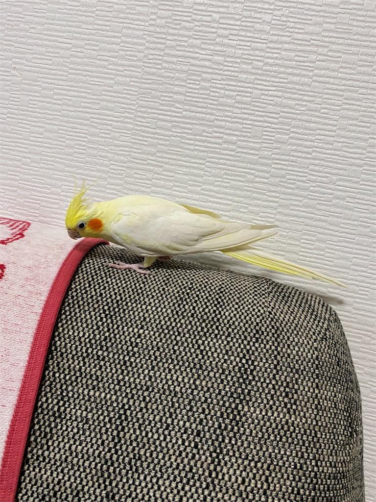 f:id:ushi-sensei:20200815021138j:image