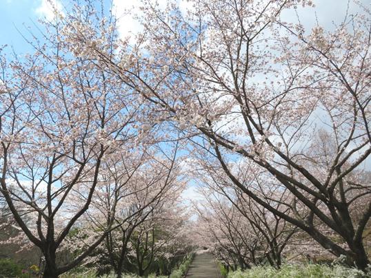 f:id:ushidama:20190403121927j:plain