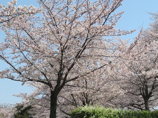 f:id:ushidama:20190407063501j:plain