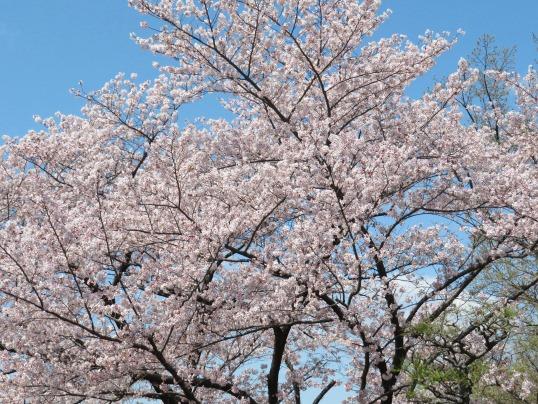 f:id:ushidama:20190410120525j:plain