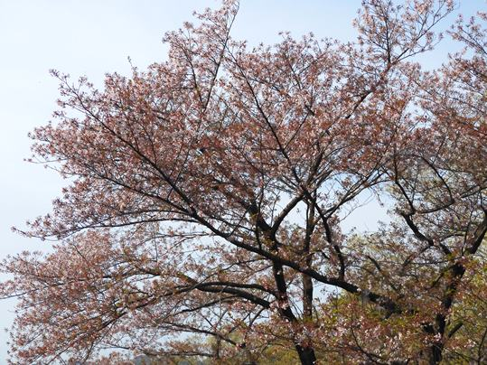 f:id:ushidama:20200417071540j:plain