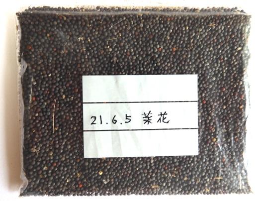 f:id:ushidama:20210605172111j:plain