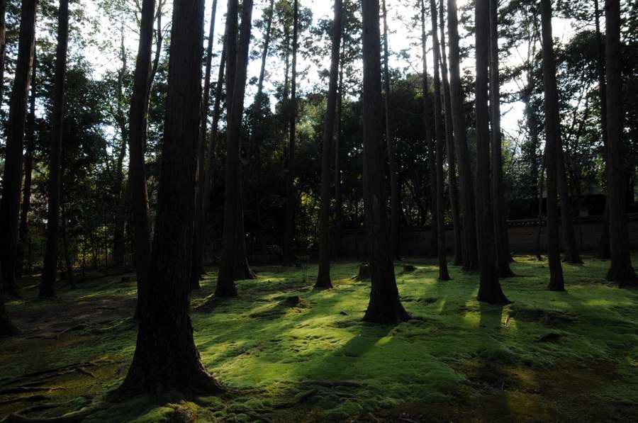 f:id:ushinabe1980:20110111110718j:image:w450