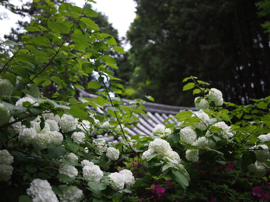 f:id:ushinabe1980:20120511134925j:image:w450