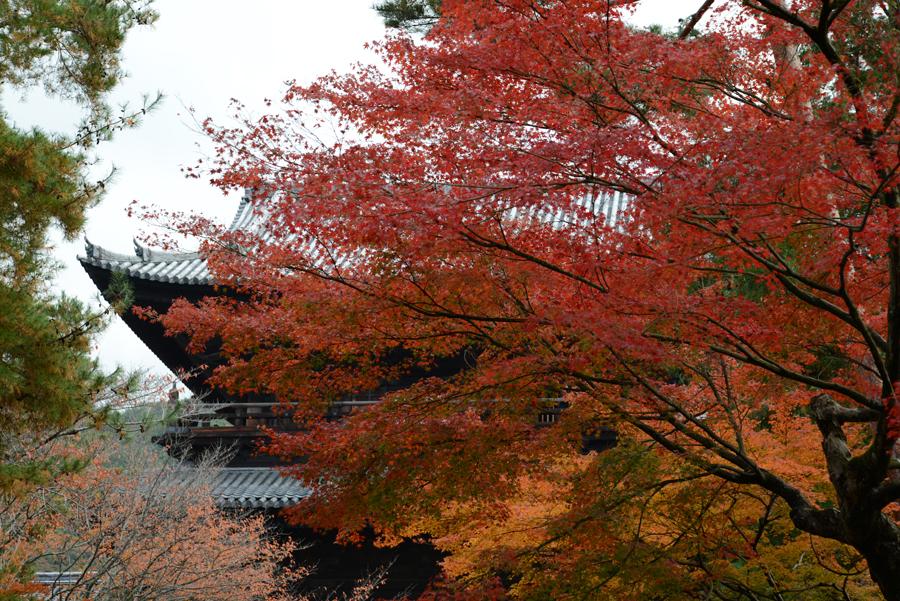 f:id:ushinabe1980:20121116110524j:image:w450