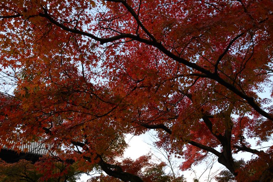 f:id:ushinabe1980:20121116121505j:image:w450