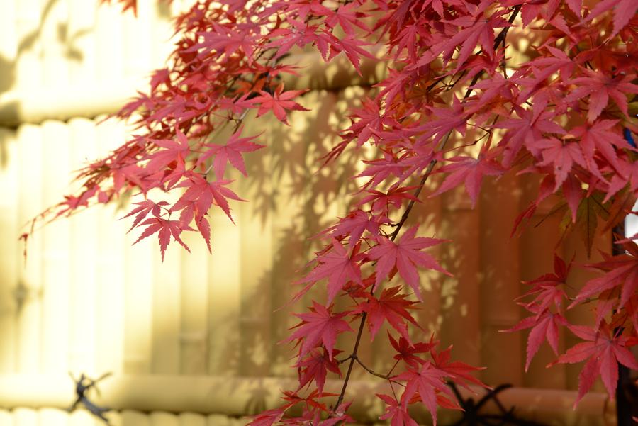 f:id:ushinabe1980:20121116125826j:image:w220