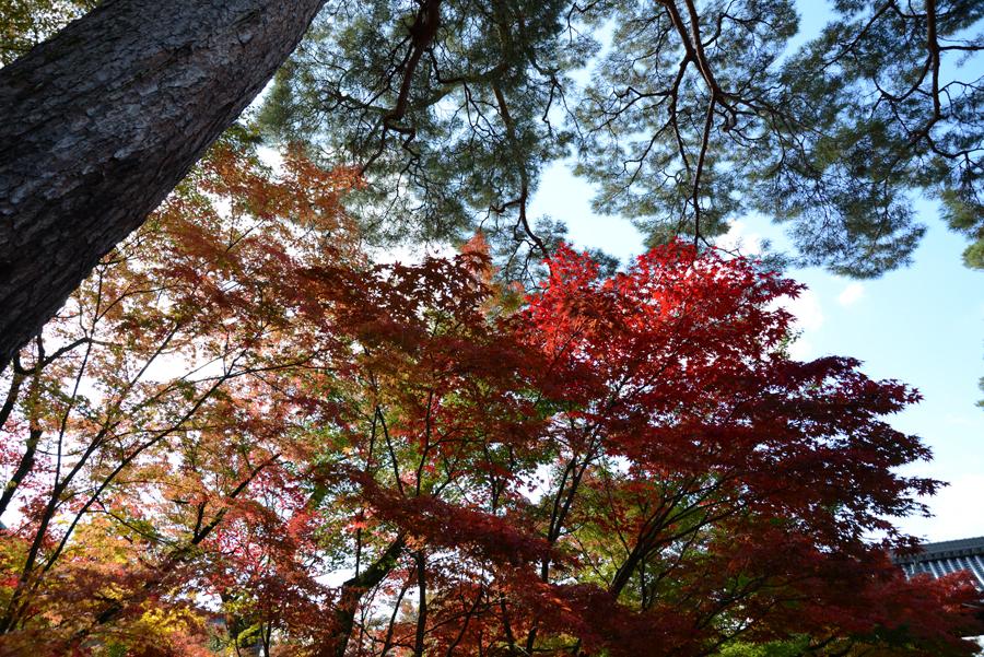 f:id:ushinabe1980:20121116130910j:image:w220