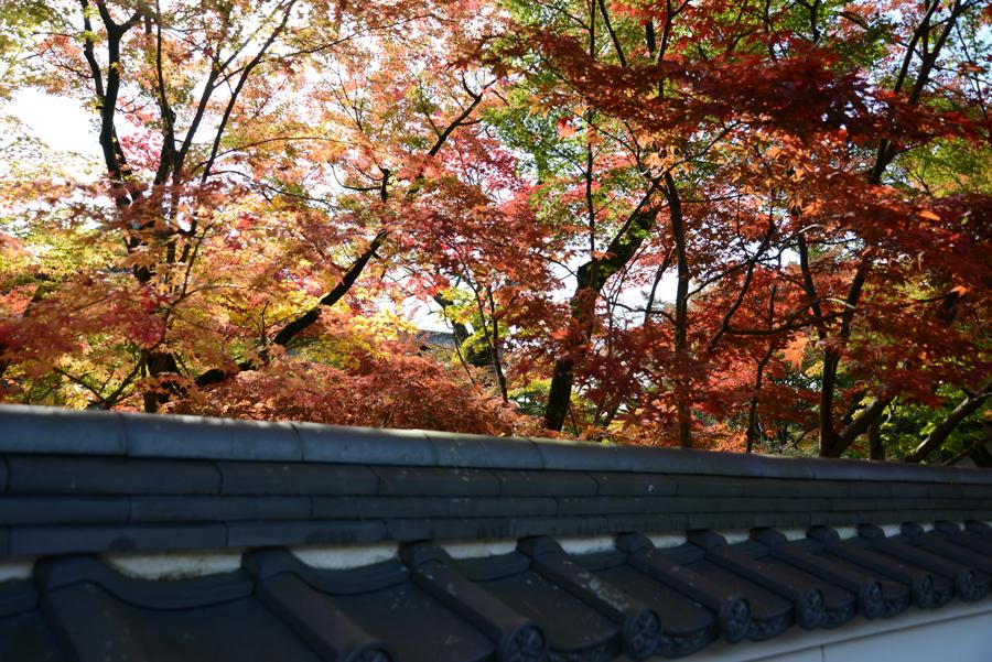 f:id:ushinabe1980:20121116130920j:image:w450