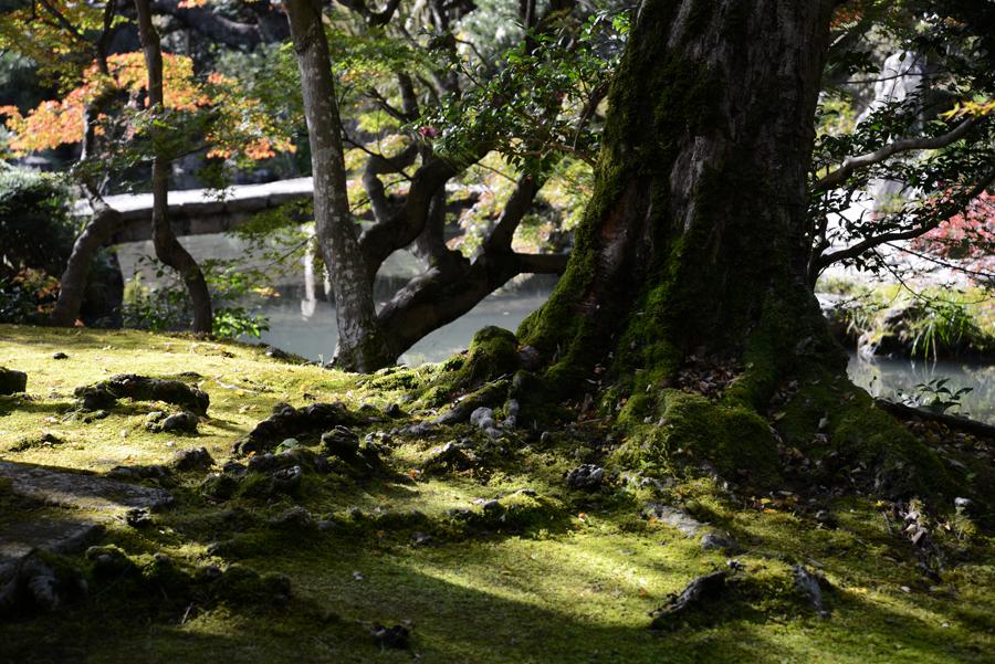 f:id:ushinabe1980:20121116134950j:image:w220