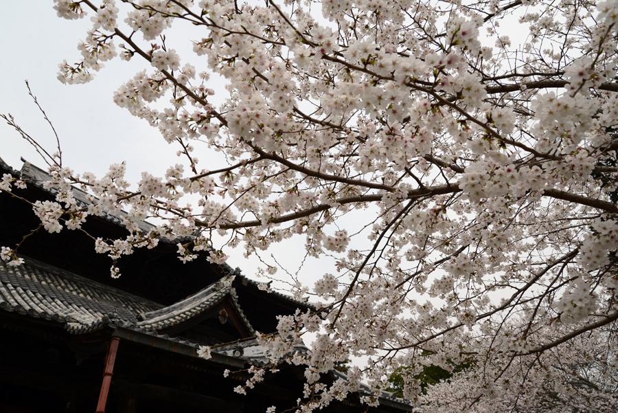 f:id:ushinabe1980:20130329132147j:image:w220