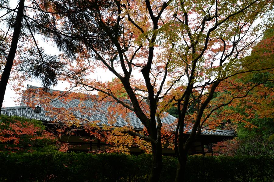 f:id:ushinabe1980:20141117115810j:image:w450