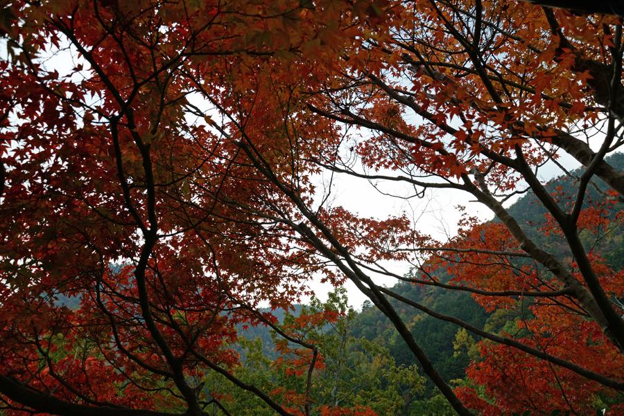 f:id:ushinabe1980:20141117141340j:image:w450