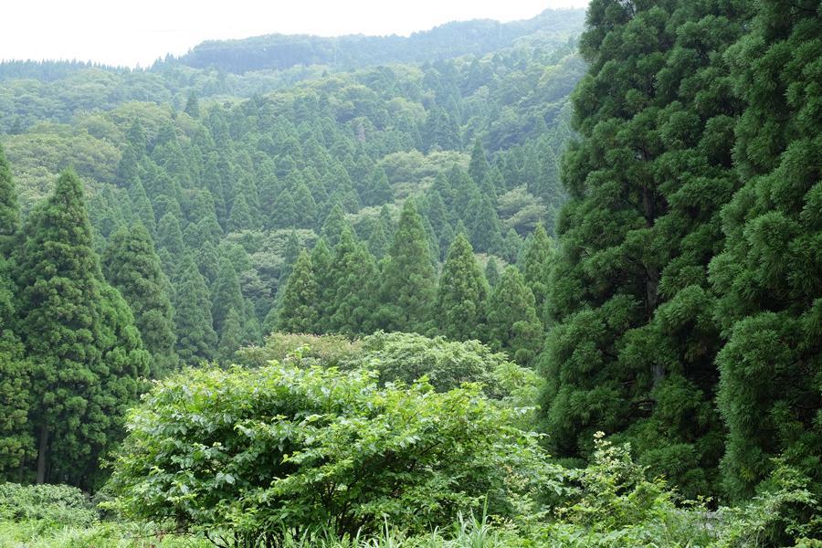 f:id:ushinabe1980:20150728094902j:image:w450