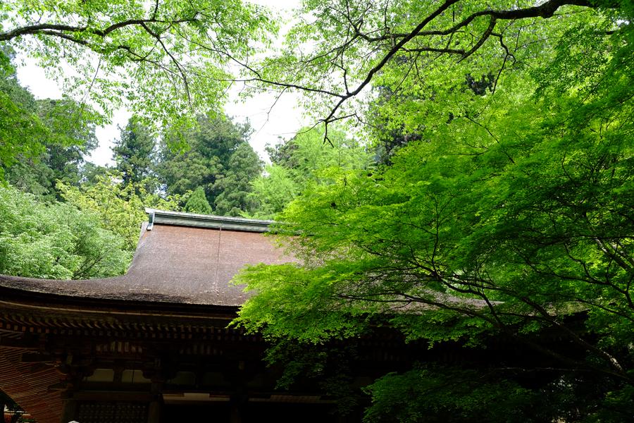 f:id:ushinabe1980:20160514111438j:image:w220