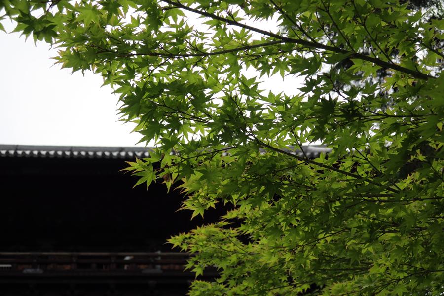 f:id:ushinabe1980:20160604101148j:image:w450