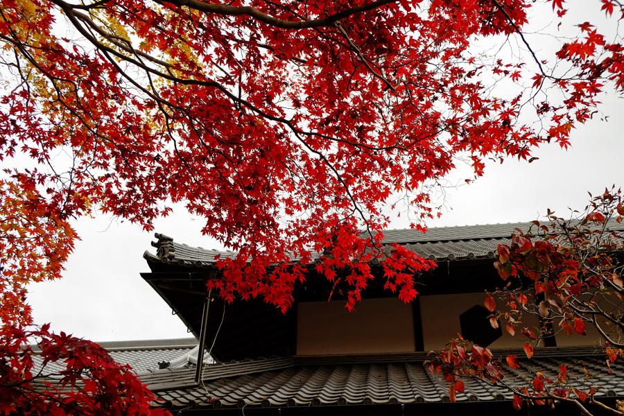 f:id:ushinabe1980:20161123130945j:image:w450