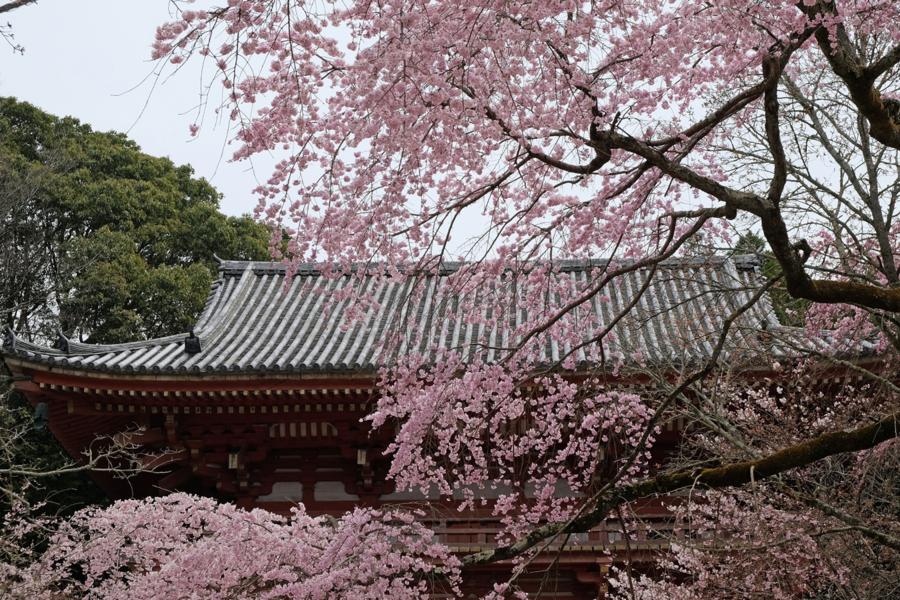f:id:ushinabe1980:20170405114637j:image:w450