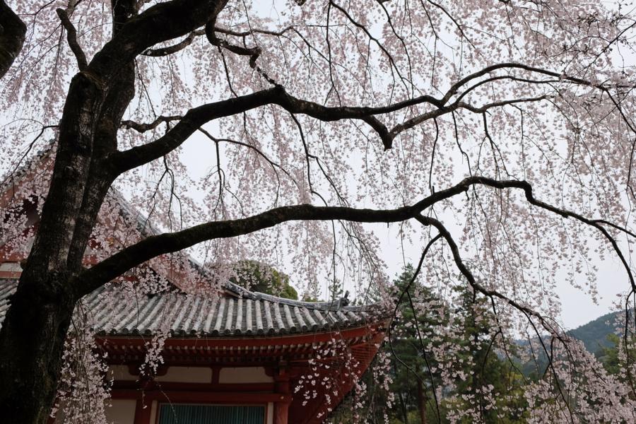 f:id:ushinabe1980:20170405115748j:image:w450