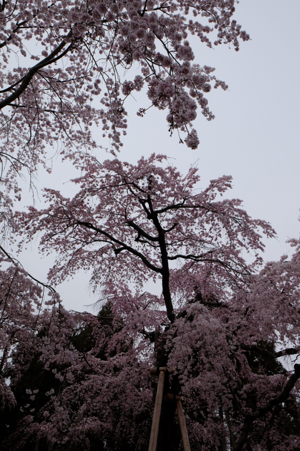 f:id:ushinabe1980:20170405124119j:image:w450