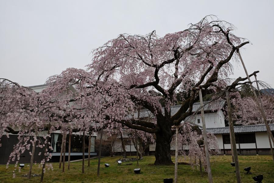 f:id:ushinabe1980:20170405130705j:image:w450