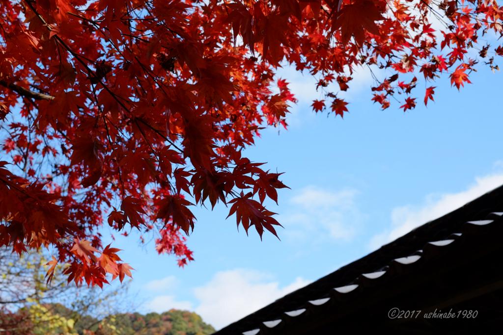 f:id:ushinabe1980:20171121131726j:image:w600