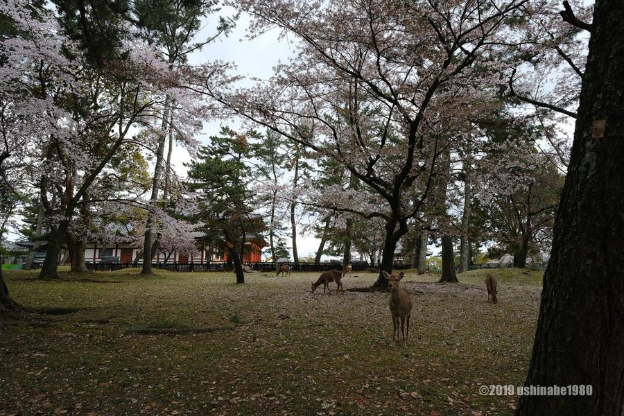 f:id:ushinabe1980:20190411111029j:image:w600