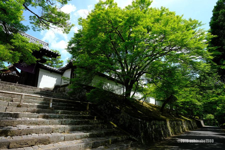 f:id:ushinabe1980:20190603133426j:image:w600