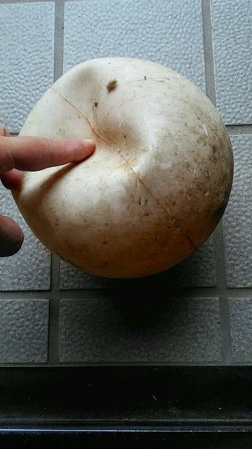 f:id:ushio-salt:20190210132911j:plain