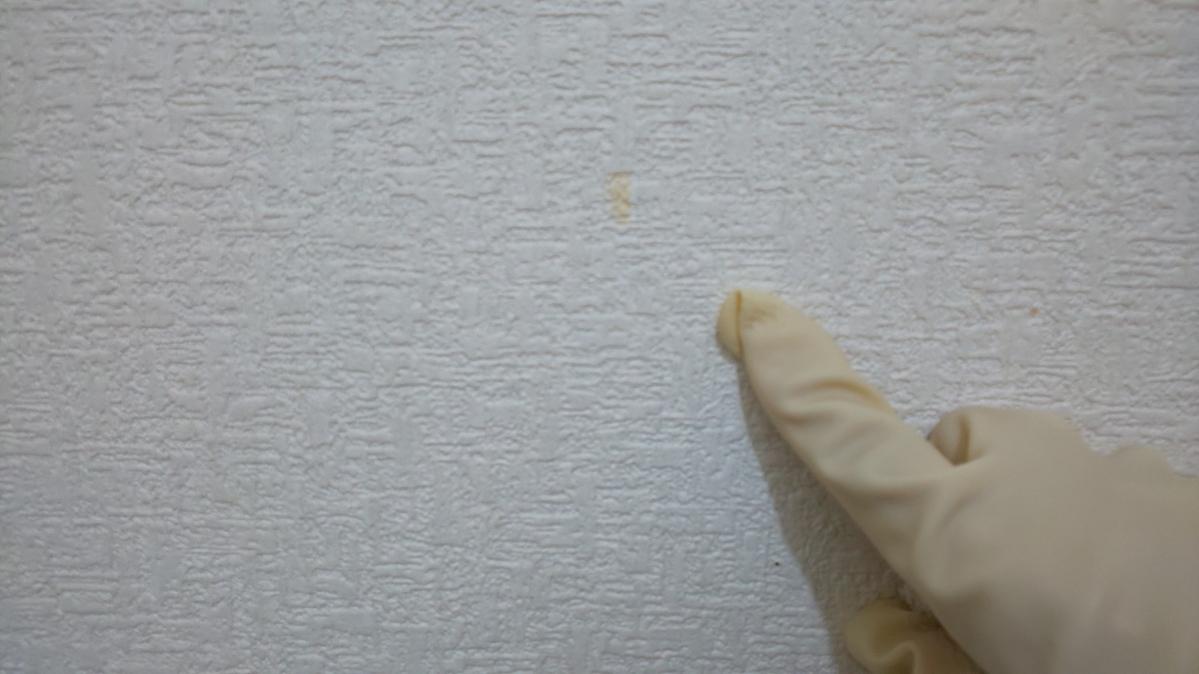 f:id:ushio-salt:20210529140955j:plain