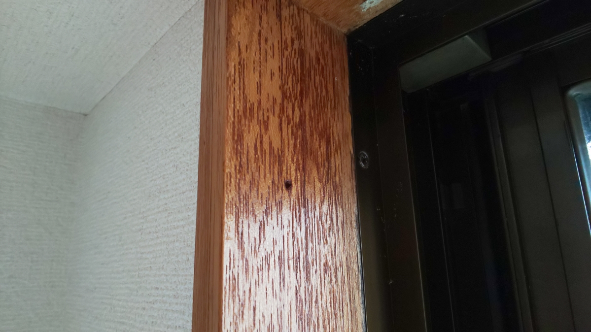f:id:ushio-salt:20210605083226j:plain