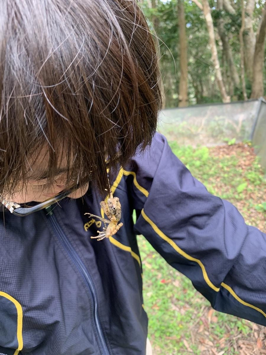 f:id:ushisaku:20190527233616j:plain