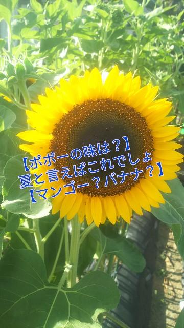 f:id:usiusi111:20190814083200j:image