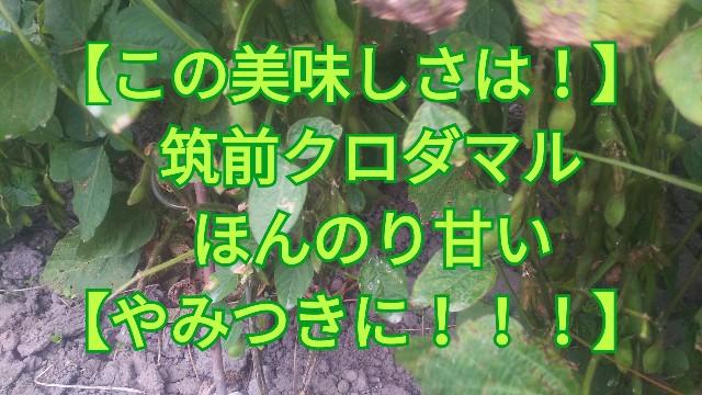 f:id:usiusi111:20191013061127j:image