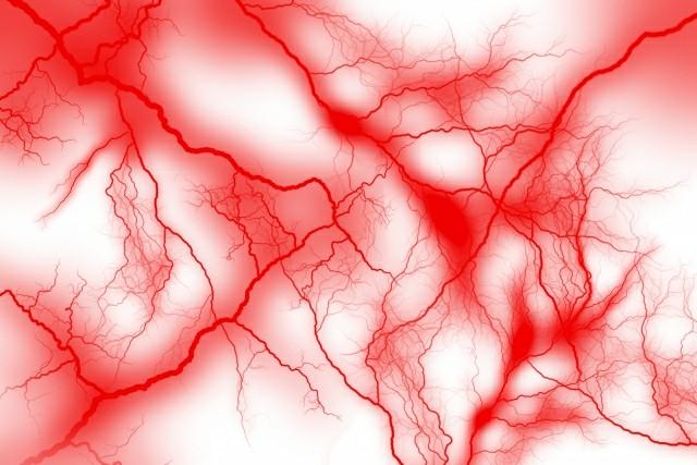 毛細血管の画像