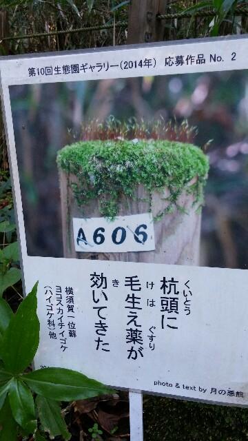 f:id:uta78wallflower:20161115011431j:image