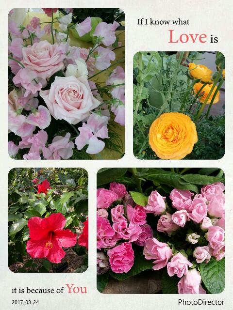 f:id:uta78wallflower:20170324233027j:image