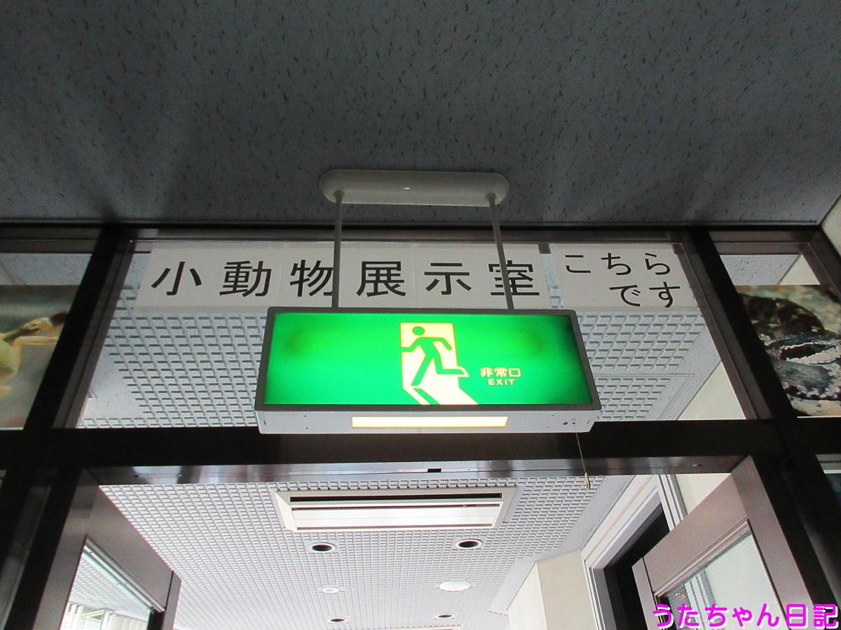 f:id:utachan0831:20210514225023j:plain